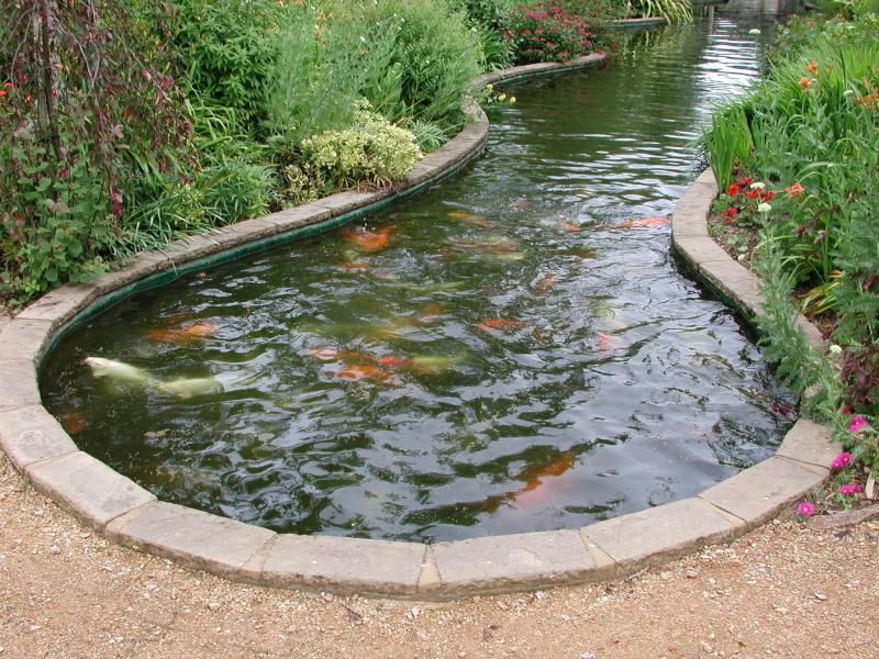 lampu kolam ikan